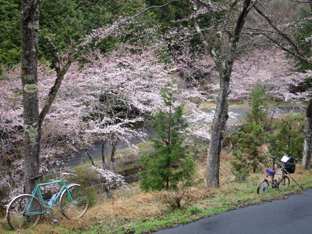 今年も仁田山峠で花見(ちと早かった)
