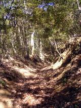 嵐山渓谷を走る!
