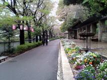 HANDYBIKEで神田川散策