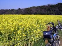 印旛沼の水辺の風景を訪ねて