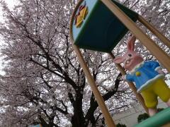 横浜市西部 桜と坂のポタリング