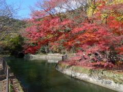琵琶湖疏水と紅葉の京都サイクリング