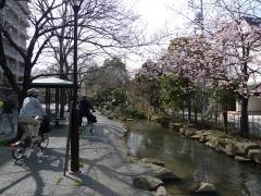 江戸川区親水緑道巡り!